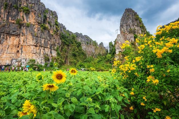 Girasoli in montagne con gli azzurri nel giardino in noen maprang phitsaunlok, tailandia.