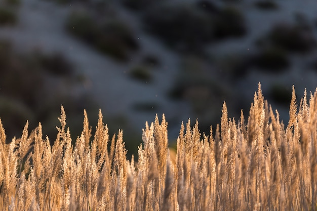 Giunchi e vegetazione tipici del fiume e delle lagune
