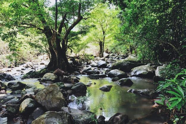 Giungla della foresta pluviale con roccia e mos verde nella foresta tropicale selvaggia