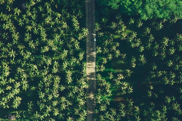 Giungla della palma nelle filippine. concetto sui viaggi tropicali di voglia di viaggiare.
