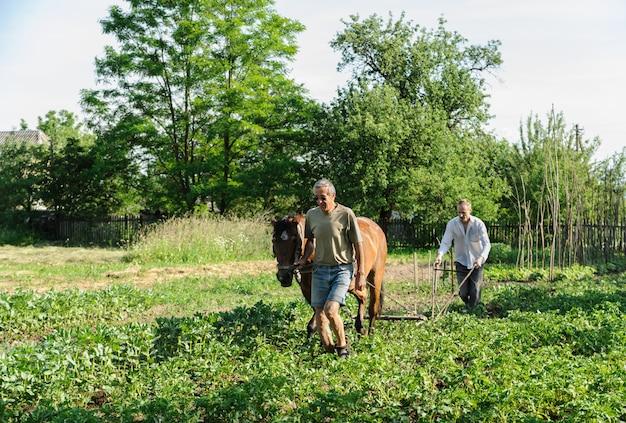 Gli agricoltori che arano la loro terra con il cavallo