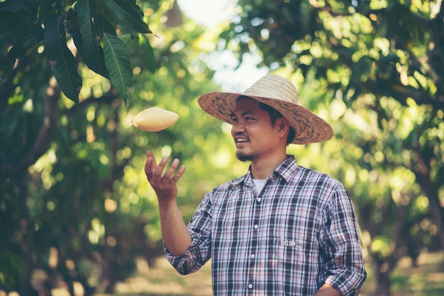 Gli agricoltori stanno controllando la qualità del mango, il concetto di giovani intelligenti della famiglia
