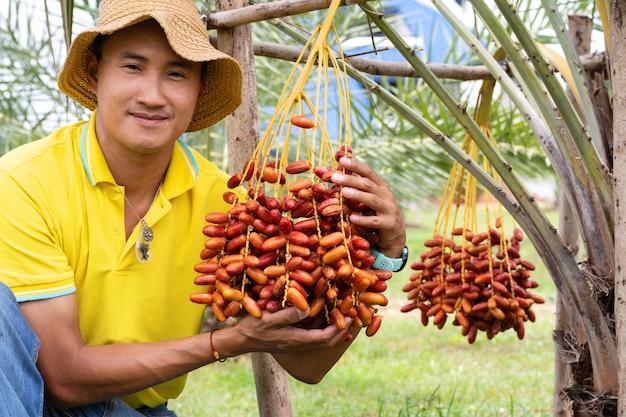 Gli agricoltori stanno raccogliendo frutti maturi di palma da dattero con rami su palma da dattero