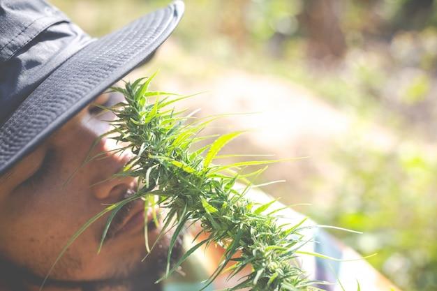 Gli agricoltori tengono alberi di marijuana (cannabis) nelle loro fattorie.