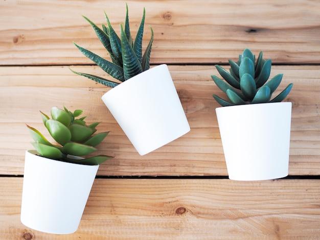 Gli alberi decorano la casa con il cactus in vaso bianco disposto sulla tavola di legno.