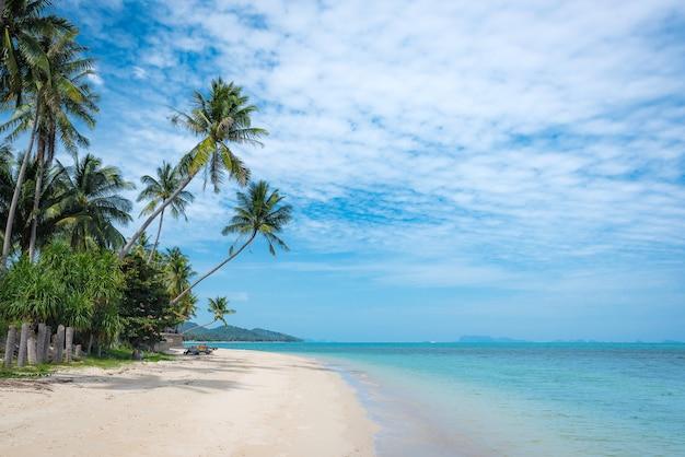 Gli alberi di cocco si estendono nel mare. immagine della spiaggia tropicale, vacanza, vacanza, concetto di ricreazione