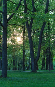 Gli alberi la sera