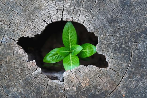 Gli alberi robusti crescono nell'incavo di un tronco d'albero.