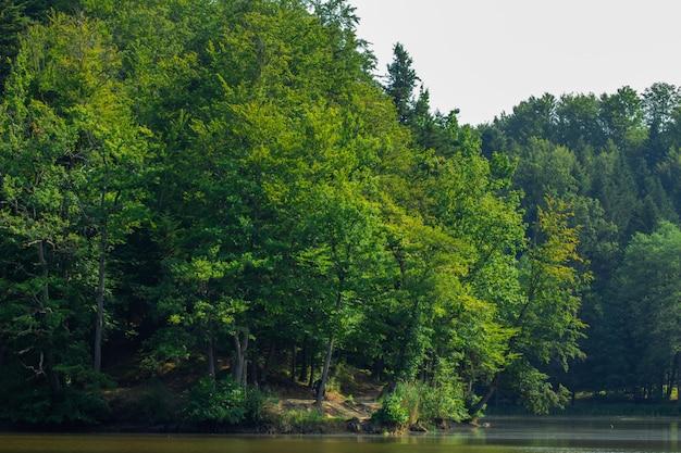 Gli alberi si avvicinano al lago nella foresta vicino a trakoscan in croazia