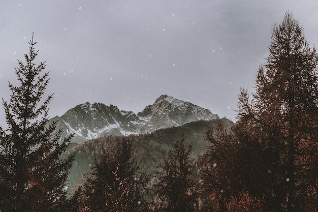Gli alberi si avvicinano alla montagna