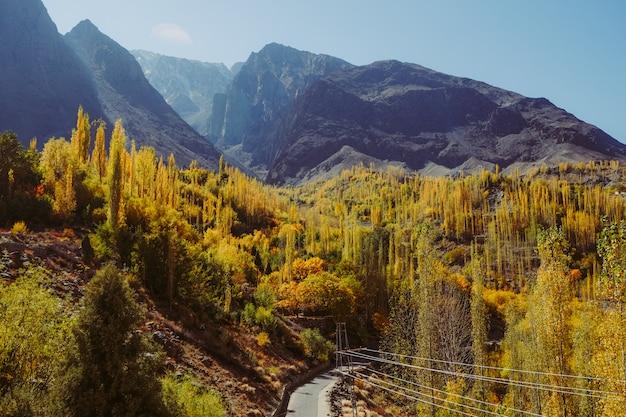 Gli alberi variopinti nella stagione di autunno contro la catena montuosa.