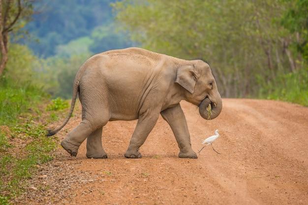 Gli elefanti selvaggi dell'asia sono così carini