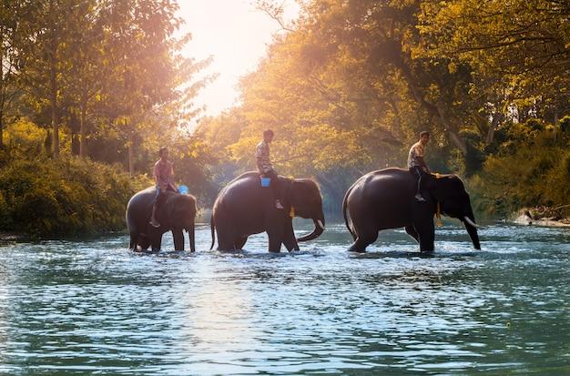 Gli elefanti tailandesi camminano per fare la doccia