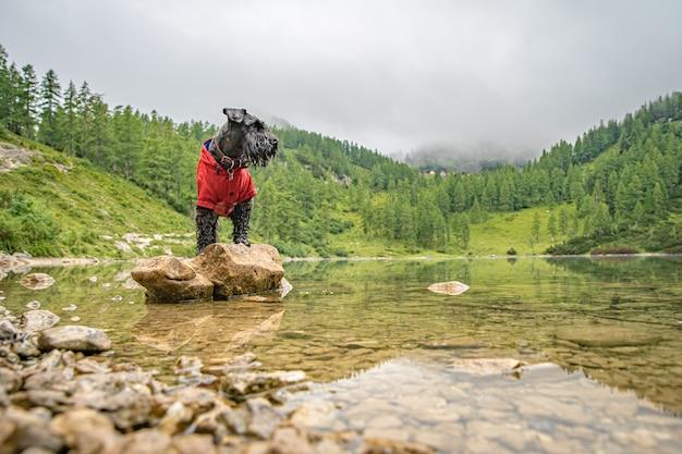Gli escursionisti nelle alpi austriache camminano su sentieri escursionistici di montagna nei boschi intorno ai laghi con cane nero