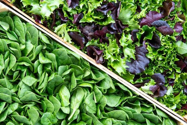Gli spinaci verdi freschi crudi del bambino lascia la priorità bassa.
