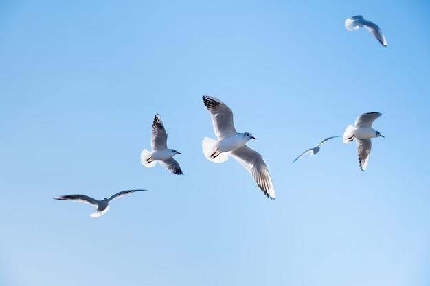 Gli uccelli dei gabbiani volano nel cielo blu