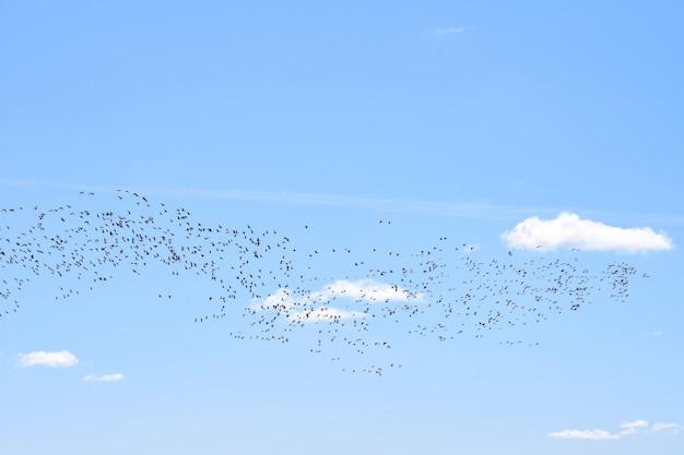 Gli uccelli migratori tornano a casa in primavera al loro habitat