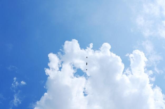 Gli uccelli si gettano sulle nuvole e sullo sfondo del cielo blu. concetto di vita di libertà