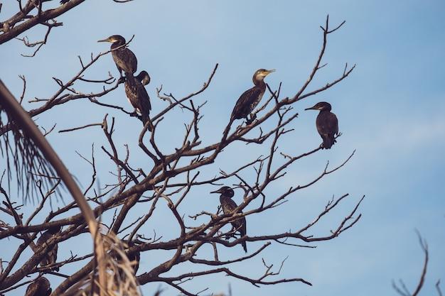 Gli uccelli si sono appollaiati sui rami di albero con la priorità bassa del cielo blu