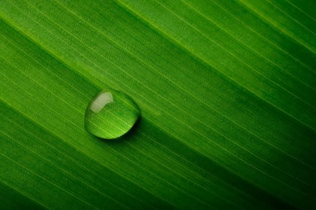 Gocce d'acqua che cade sulle foglie di banana