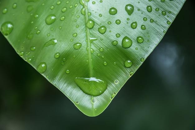 Gocce d'acqua di vista superiore sulle foglie in natura, sfocatura e lo spazio di sfondo.