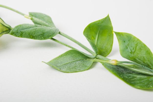 Gocce d'acqua su foglie su sfondo bianco