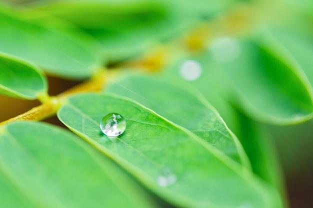 Gocce d'acqua su foglie verdi.