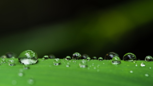 Gocce d'acqua sulle foglie goccia di pioggia verde stagione delle piogge