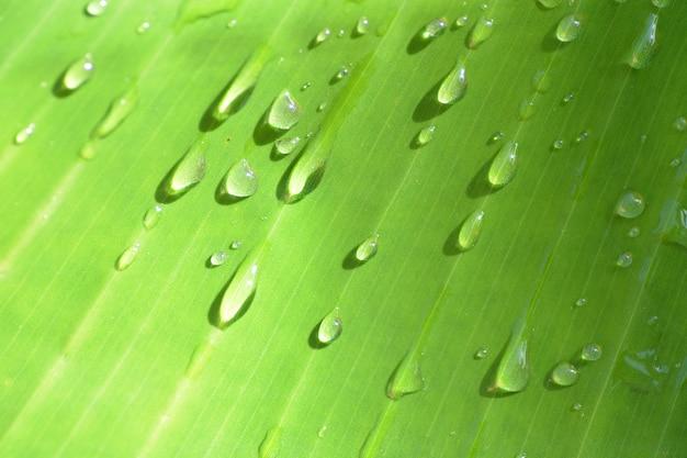 Gocce di pioggia su bakcground di foglie di banana