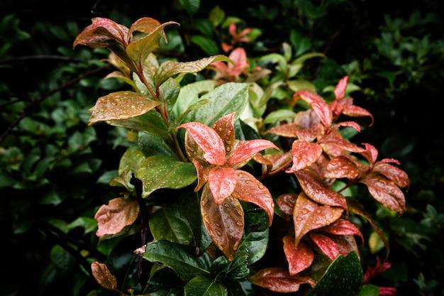 Gocce di pioggia su bellissime foglie tropicali