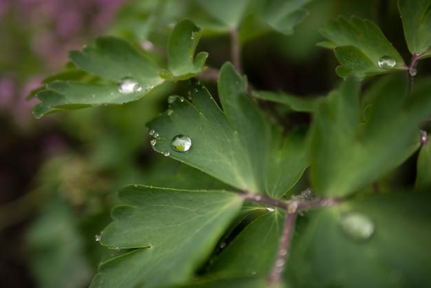 Gocce di pioggia su foglie verdi, carta da parati estiva
