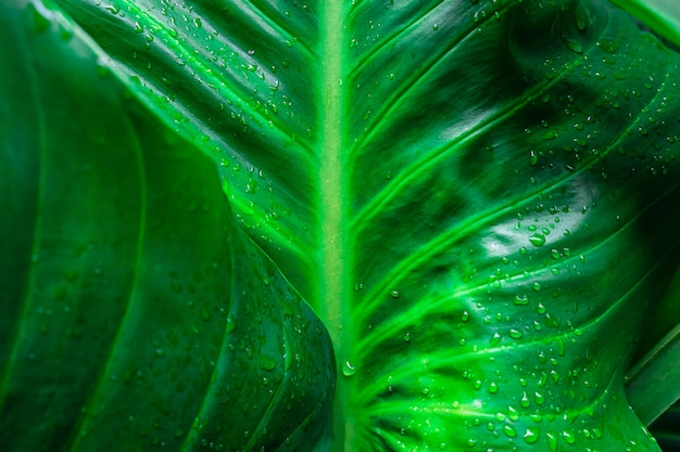 Gocce di pioggia su sfondo verde foglia