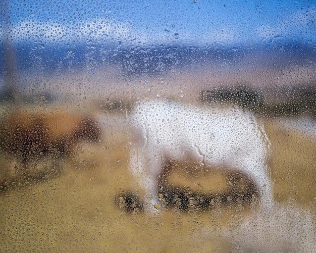 Gocce di pioggia sulla finestra