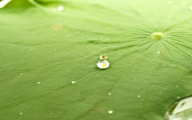 Goccia d'acqua perla sulla foglia verde