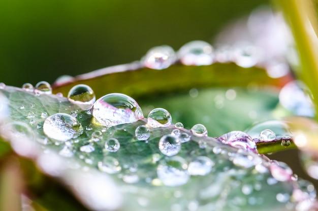 Goccia di acqua a macroistruzione sulla foglia verde