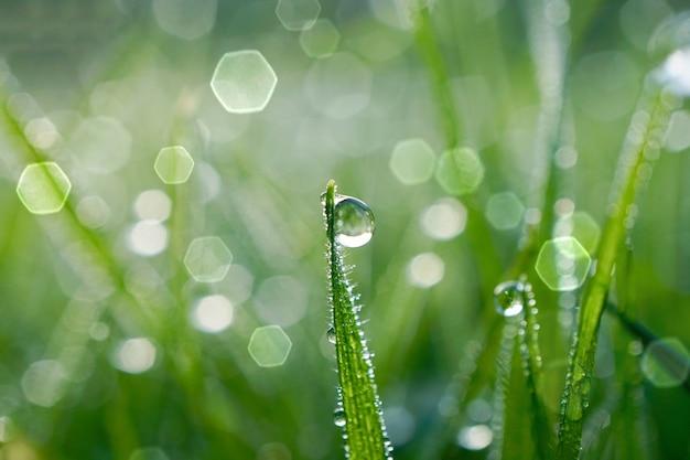 Goccia di pioggia sull'erba verde nei giorni di pioggia nella stagione invernale, sfondo verde e luminoso