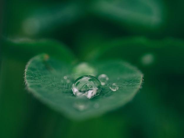 Goccia di rugiada mattutina su una foglia verde