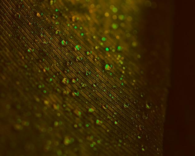 Goccioline di acqua verde trasparente sulla superficie marrone vaga della piuma