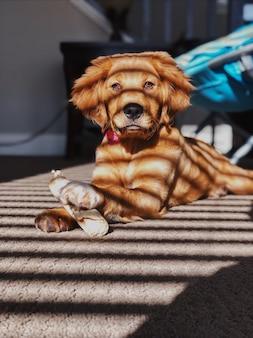 Golden retriever carino domestico sdraiato sul pavimento e tenendo il suo giocattolo da masticare sotto una finestra