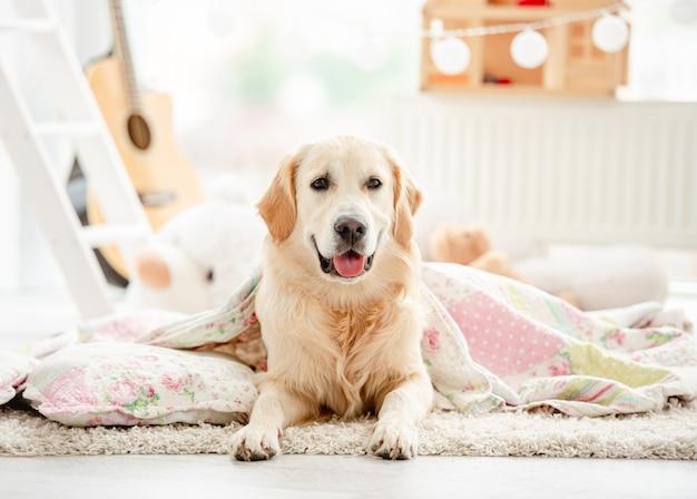 Golden retriever sveglio coperto di coperta