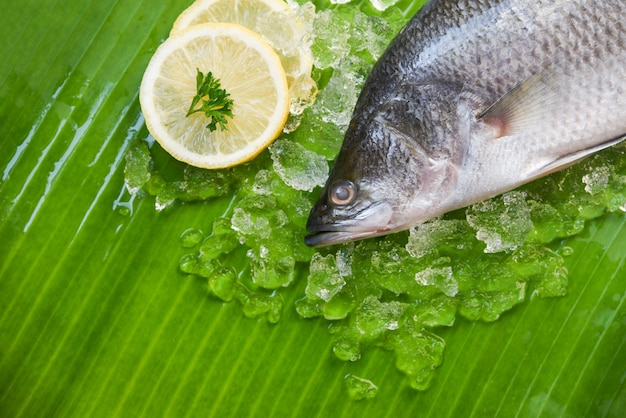 Gourmet crudo dell'oceano della zolla di pesce del branzino dei frutti di mare su ghiaccio