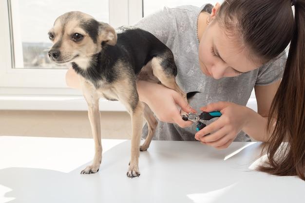 Governare gli artigli di un cane