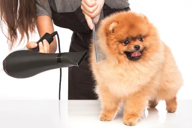 Governare un cane