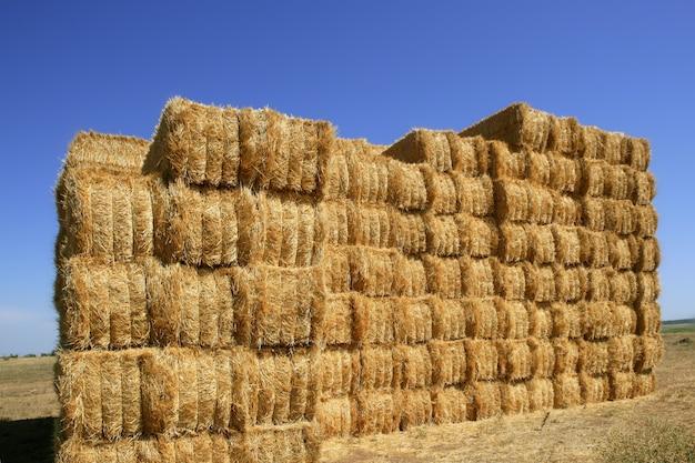 Granaio di cereali con pila di forma quadrata su colonne