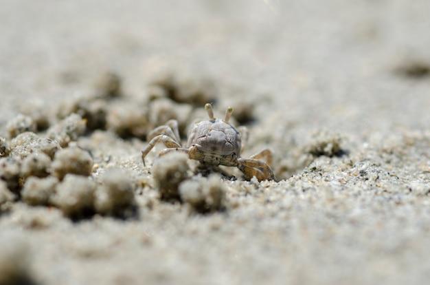 Granchi e granelli di sabbia sulla spiaggia con sfondo sfocato.