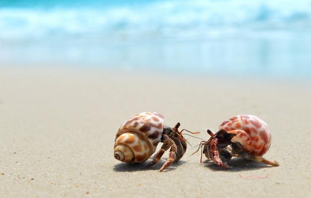 Granchio eremita che cammina sulla spiaggia.