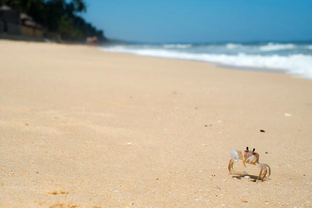 Granchio su una spiaggia di sabbia bianca con cielo blu del mare, nessuno, vacanze estive