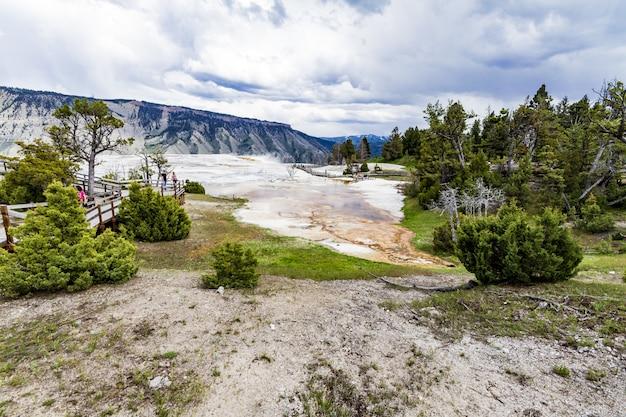 Grandangolo del parco nazionale di yellowstone pieno di alberi e cespugli verdi