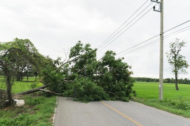 Grande albero caduto e bloccare la strada