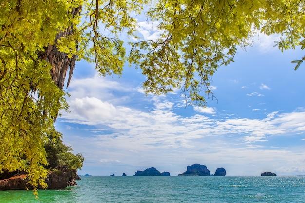 Grande albero di tamarindo sulla spiaggia.